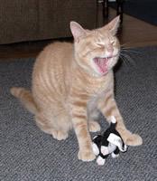 Toby Laughs