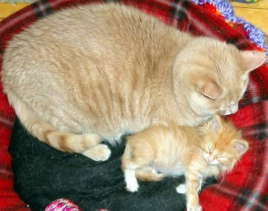 Toby and Marmalade